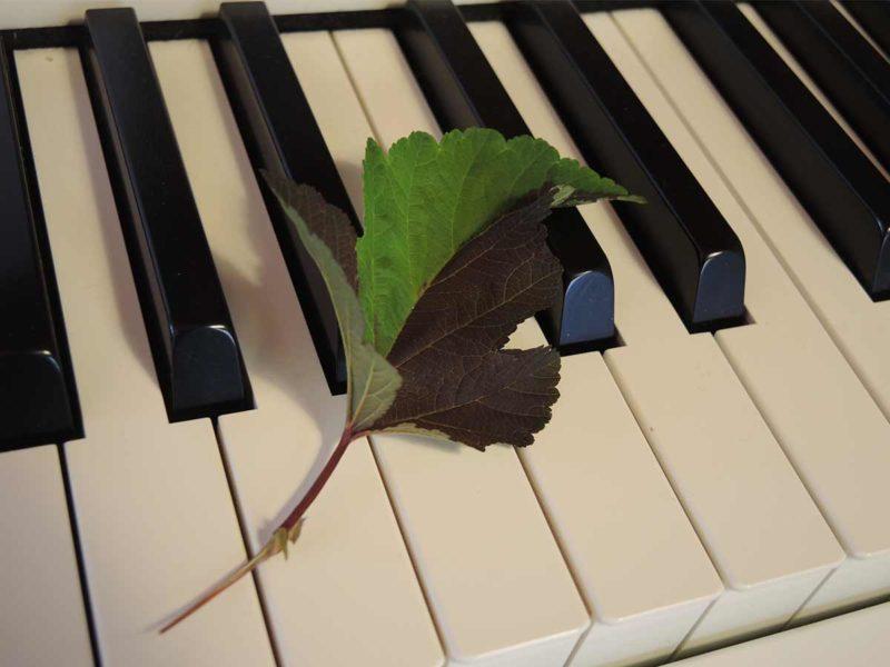 Blatt Klavier - Klaviertasten